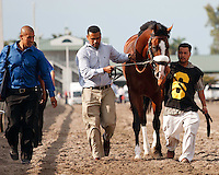 Union Rags being led to the saddling paddock for the Florida Derby (G1). Gulfstream Park Hallandale Beach Florida. 03-31-2012. Arron Haggart / Eclipse Sportswire