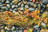 Små färgglada stenar i olika färger vis en strand på Grönskär i Stockholms skärgård.