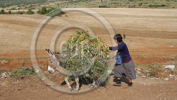Liqenas-Korca/Korce-Albania - August 04, 2004---A woman and a donkey, heavily loaded with green stuff, return to the village of Liqenas, National Park of Prespa (triangle border lake of Albania, Macedonia, Greece); project area of GTZ-Wiram-Albania (German Technical Cooperation, Deutsche Gesellschaft fuer Technische Zusammenarbeit (GTZ) GmbH); agriculture-people---Photo: Horst Wagner/eup-images
