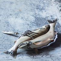 Omble Chevalier d'Eric Jacquier, pécheur sur le Lac Léman à Lugrin - Stylisme : Valérie LHOMME<br /> Trout Chevalier Eric Jacquier, fisherman on Lake Geneva in Lugrin - Stylist: Valérie LHOMME