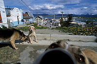 Street dogs greet in Ushuaia, Argentina, where a century of intermittent economic booms have drawn thousands of immigrants to rapidly developed neighborhoods. With them have come waste management problems, pollution, and thousands of damaging abandoned pets that often kill regional wildlife to survive.