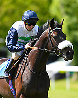 """King Lud ridden by Martin Dwyer goes down to the start of The Willton Homes """"Confined"""" Novice Stakes (Colts & Geldings)  during Afternoon Racing at Salisbury Racecourse on 17th May 2018"""