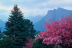 Pink crabapple blossoms form a foreground for the storm hovering over the Needles on Lumpy Ridge above Estes Park, Colorado.