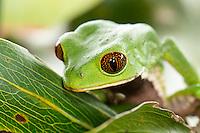 Frogs Ecuador