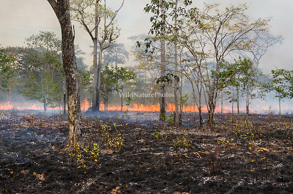 Traditional dry season forest burning. (near Okoki, Cambodia)