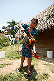 BELIZE, Punta Gorda, Toledo District, Desiree Mes kills and prepares a chicken for lunch, San Jose Maya Village