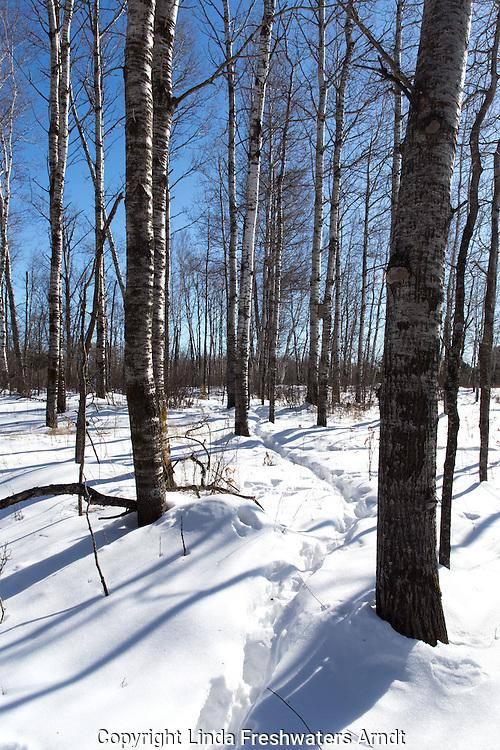 Animal trail through the snow