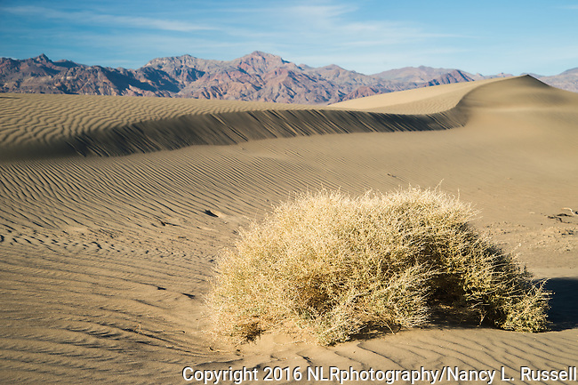 Mesquite flats in Death Valley