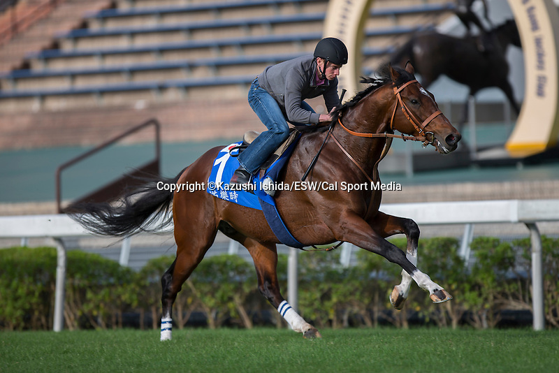 DEC 11,2015: Maurice ,trained by Nobuyuki Hori,exercises in preparation for the Hong Kong Mile at Sha Tin in New Territories,Hong Kong. Kazushi Ishida/ESW/CSM