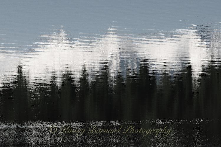 Forest reflections on Surveyor Lake