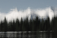 Forest reflections on Surveyor Lake