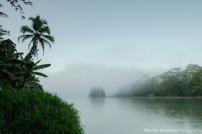 Palm tree and misty morning on the Rio San Carlos, Boca Tapada, Costa Rica
