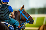HALLANDALE BEACH, FL - JANUARY 25: Gunnevera gallops in preparation for Pegasus World Cup Invitational at Gulfstream Park Race Track on January 25, 2018 in Hallandale Beach, Florida. (Photo by Alex Evers/Eclipse Sportswire/Breeders Cup)