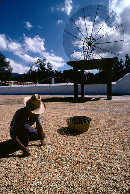Guatemala, coffee, coffea, organic, beans, process, dry, turn, patio, worker, man, patio, worker, man