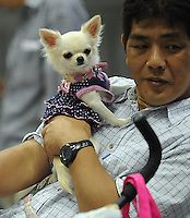 An owner and his mianature pooch at at the Osaka Pet Expo fashion show held from 23rd till 25th September 2011, Japan.<br /> <br /> Photo by Richard Jones