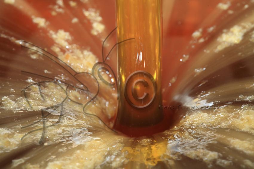 Honey flow, honey extraction