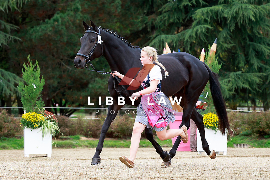 AUT-Rebecca Gerold with Shannon Queen during the CCI1*6YO First Horse Inspection at 2016 Mondial du Lion FEI World Breeding Eventing Championships for Young Horses. Wednesday 19 October. Copyright Photo: Libby Law Photography
