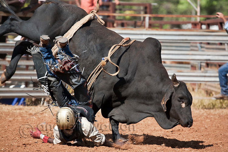Bull rider getting bucked off his mount at Chillagoe Rodeo.  Chillagoe, Queensland, Australia