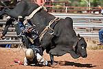 Bull rider getting bucked off his mount at Chillagoe Rodeo.  Chillagoe, Queensland, Australia