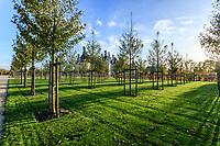 France, Loire-et-Cher (41), Chambord, château de Chambord, le jardin à la française, plantation de merisiers