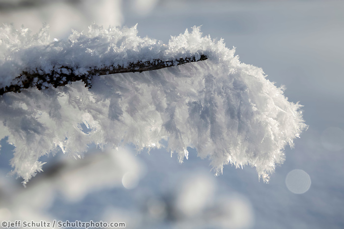 Winter landscape of hoarfrost covered branch in Southcentral, Alaska.  <br /> <br /> <br /> <br /> Photo by Jeff Schultz/SchultzPhoto.com  (C) 2017  ALL RIGHTS RESVERVED