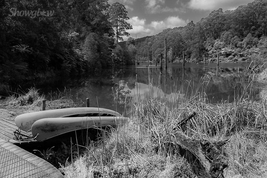 Image Ref: CA599<br /> Location: Lake Elizabeth, Forrest<br /> Date of Shot: 20.10.18
