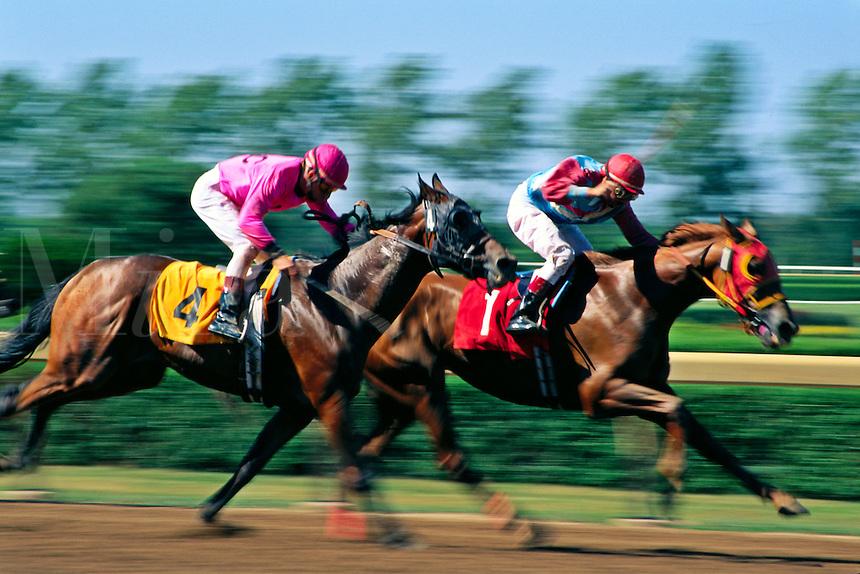 Thorougbred horse racing