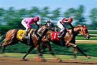 Thorougbred horse racing