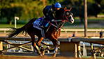 October 27, 2019 : Breeders' Cup Dirt Mile entrant Blue Chipper, trained by Kim Young Kwan, exercises in preparation for the Breeders' Cup World Championships at Santa Anita Park in Arcadia, California on October 27, 2019. Scott Serio/Eclipse Sportswire/Breeders' Cup/CSM