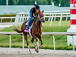 January 24, 2020: Channel Cat gallops as horses prepare for the Pegasus World Cup Invitational at Gulfstream Park Race Track in Hallandale Beach, Florida. Scott Serio/Eclipse Sportswire/CSM