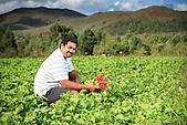 Akiléo Suve, agriculteur au Mont-Dore (La Forestière du Sud, Plum) : persil, radis, choux, bananes