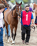 HALLANDALE BEACH, FL - FEB 3:Thewayiam #1 trained by H.Graham Motion is led to the paddock prior to winning the $100,000 Sweetest Chant Stakes (G3) at Gulfstream Park on February 3, 2018 in Hallandale Beach, Florida. (Photo by Bob Aaron/Eclipse Sportswire/Getty Images)