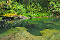 Quiet pool in the Englishman River <br /> Englishman River Falls Provincial Park<br /> British Columbia<br /> Canada