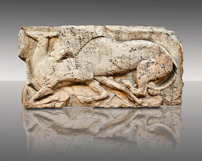 """Lion killing deer  from the """"Satyr Hunting Wils Animals, freezes, 460 B.C.  From Xanthos, UNESCO World Heritage site, south west Turkey. A British Museum exhibit GR 1848-10-20-2-9 (sculpture B 2902- 298)."""