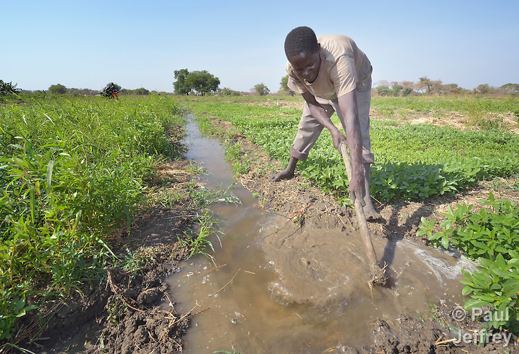 Ali Adam controls the flow of irrigation water as he works in a community garden in Mading Achueng, a village in Abyei, a contested region along the border between Sudan and South Sudan. Under a 2005 peace agreement, the region was supposed to have a referendum to decide which country it would join, but the two countries have yet to agree on who can vote. In 2011, militias aligned with Khartoum drove out most of the Dinka Ngok residents, pushing them across a river into the town of Agok. Yet more than 40,000 Dinka Ngok have since returned with support from Caritas South Sudan, which has drilled wells, built houses, opened clinics and provided seeds and tools for the returnees.