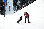 Crested Butte ski patrolman Shawn Williams and his chocolate avalanche rescue lab, Ziggy during training on the mountain.