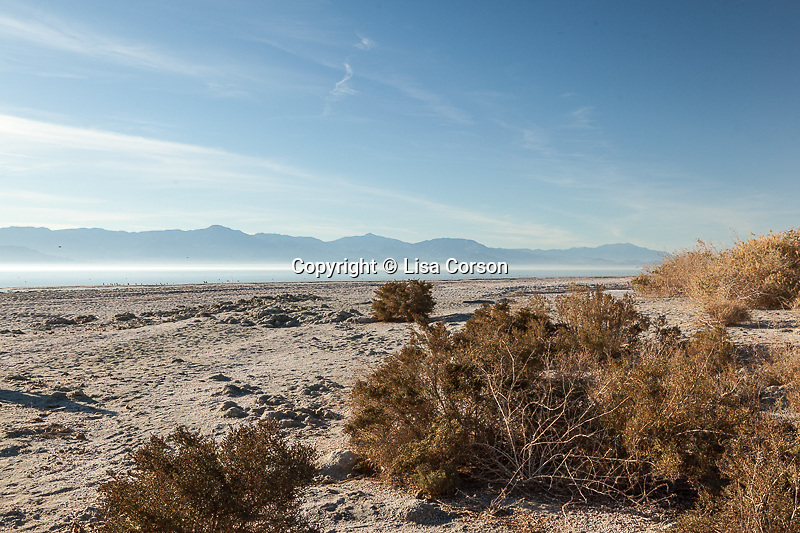 Salton Sea, California. Images are available for editorial licensing, either directly or through Gallery Stock. Some images are available for commercial licensing. Please contact lisa@lisacorsonphotography.com for more information.
