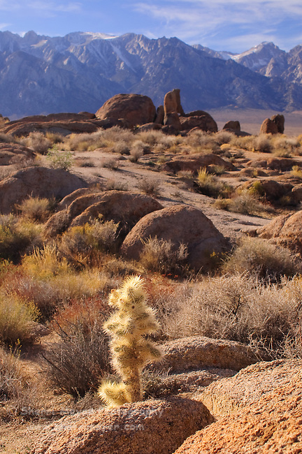 Cactus in the Alabama Hills, Lone Pine, California
