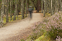 Cyclist on the Spey Way near Aviemore, Cairngorm National Park, Scottish Highlands, Uk