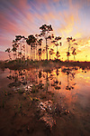 Wet season, Everglades National Park