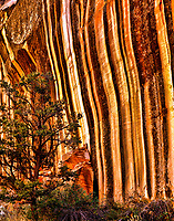 Wall Detail in Capitol Gorge  Capitol Reef National Park, Utah  Waterpocket Fold October  Narrow sandstone canyon through gorge