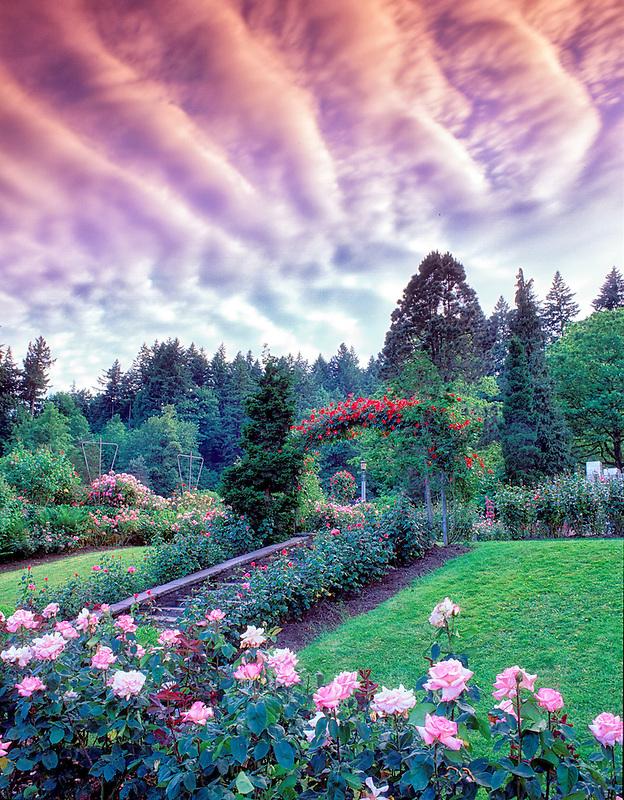 V00297M.tiff   International Rose test Gardens with clouds. Portland, Oregon