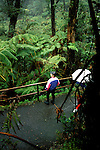 HI:  Hawaii Volcanoes National Park, Big Island, fern forest      .Photo Copyright:  Lee Foster, lee@fostertravel.com, www.fostertravel.com, (510) 549-2202.Image: hivolc213