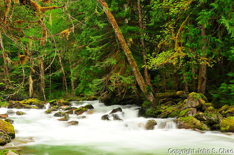 Spring snow meltwater cascades down a rocky section of Newhalem Creek through forest in North Cascades National Park, Washington State