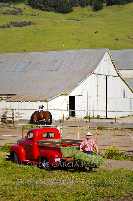 Cowboy bucking hay with his 1949 Red Ford Truck, San Luis Obispo, California (John Madonna)