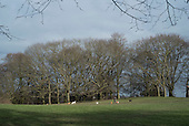 Dog walker, Hampstead Heath, London.