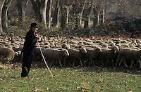 Europe/France/Provence-Alpes-Côte d'Azur/13/Bouches-du-Rhône/Saint-Rémy-de-Provence : Mr Baculard berger et son troupeau de moutons [Autorisation : 26]
