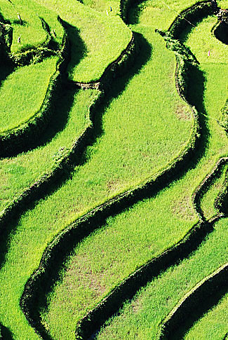 Bangaan Rice Terraces, Ifugao - Philippines