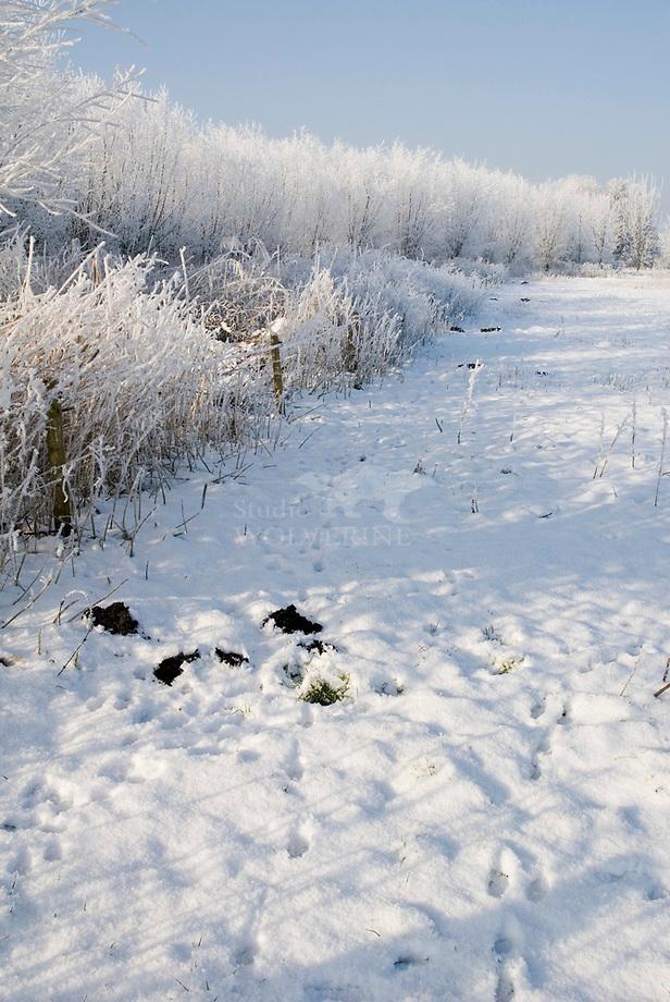 Berijpt winterlandschap met molshopen Het Broek, Chaam.