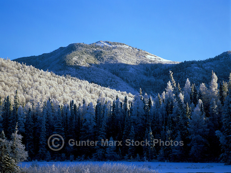 Winter Setting of Frosted Trees in a Warm Marsh, in Liard River Hot Springs Provincial Park, Northern British Columbia, Canada